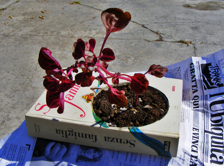 Turn An Old Book Into A Planter