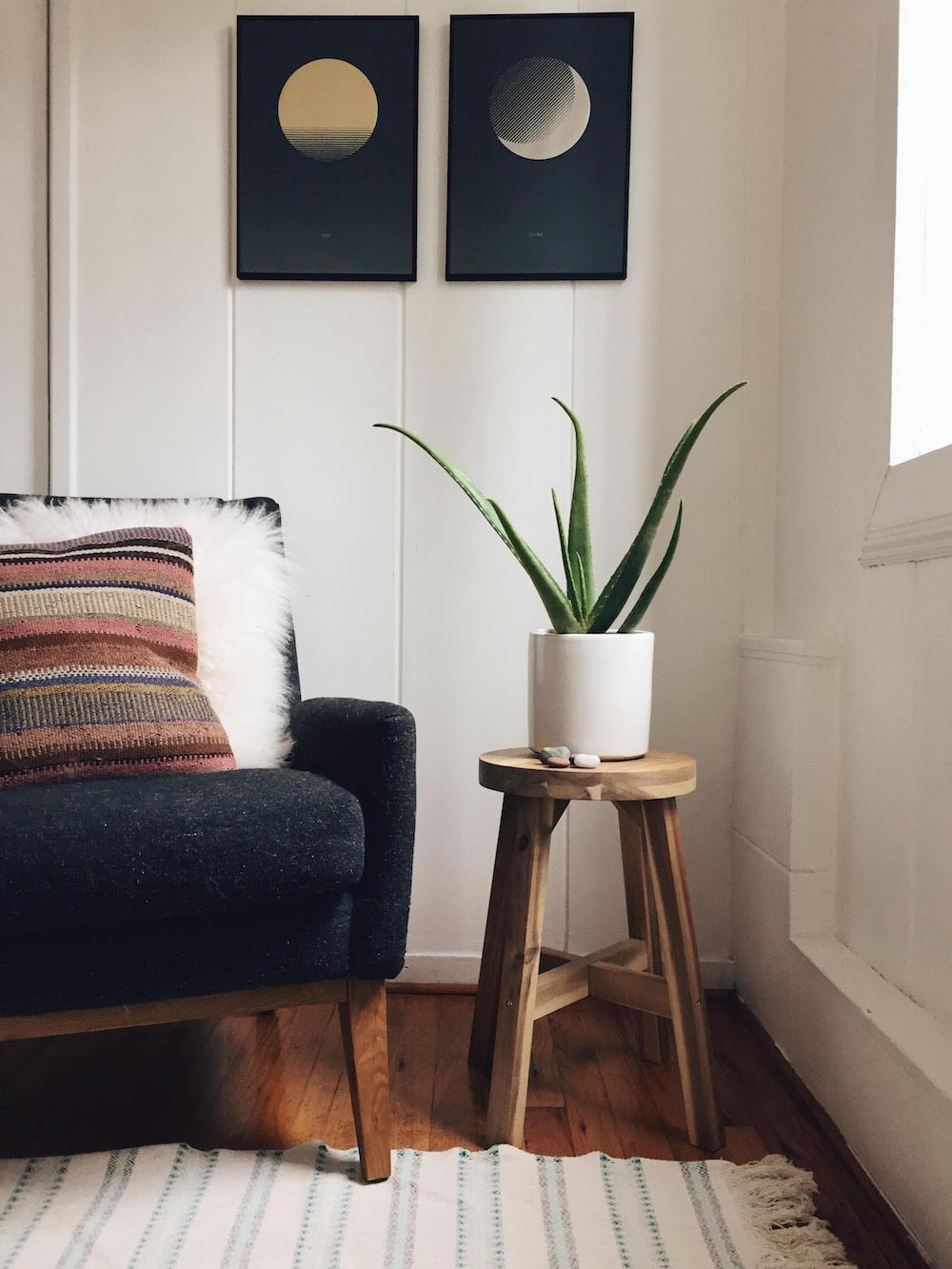 Aloe Vera Plants in Bedroom