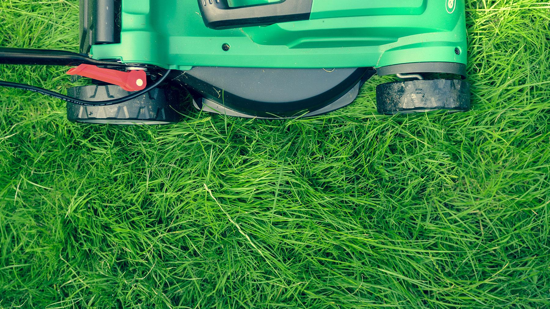 Cut Your Grass Low Gradually